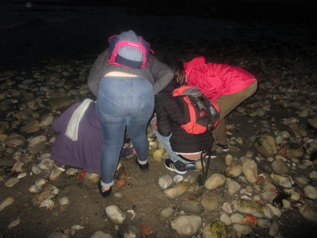La pêche aux coquillages, de nuit, à marée montante...Les coquillages normands sont énormes, et les belges font pâle figure en comparaison...